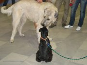 čau kámo, nevíš kudy na výstavu psů?