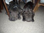 Endží a Šerpi byly fakt unavené