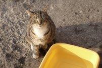 vyhání kočičku od svého pitného režimu...