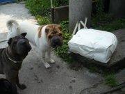 Babu přinesl pošťák velký balík....