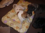 Babu se nehodlá o pelíšek s nikým dělit