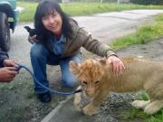 lvíček César