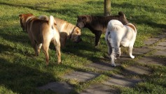 Alpine, Scarlet, Anička, Babu