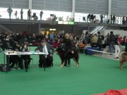 ale vyhrát může jen jeden...tentokrát to byl Elbrus Satánek, V1,CAJC,Nejlepší mladý pes